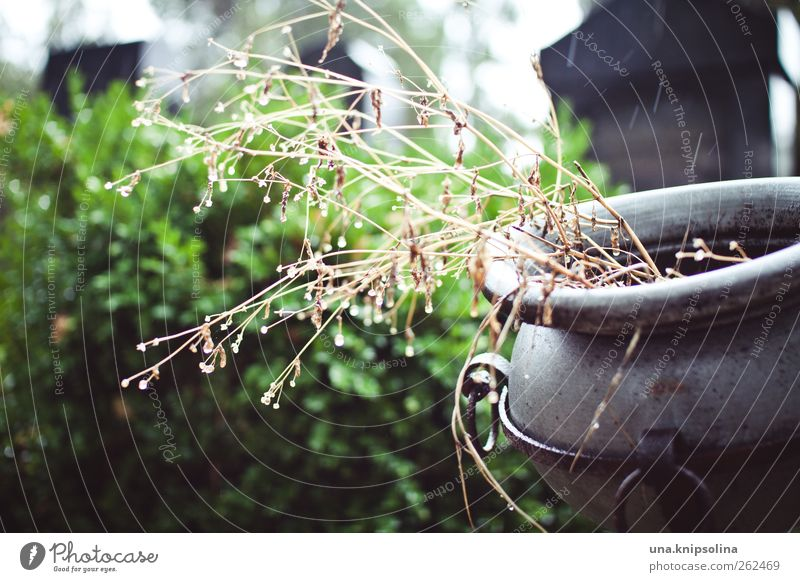 regen.tropfen Pflanze Metall Park Regen nass Wassertropfen Sträucher Friedhof Schalen & Schüsseln schlechtes Wetter Grabstein Amphore