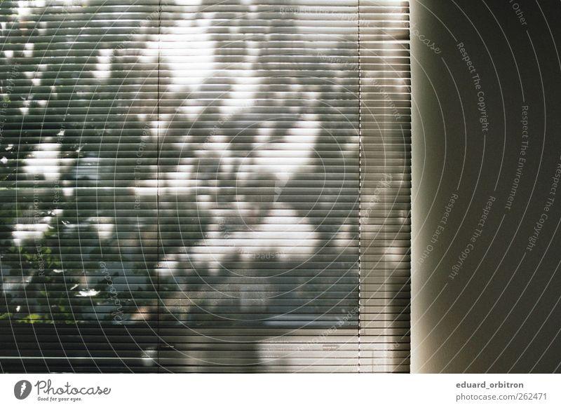 Madung Fenster ästhetisch Jalousie Baum Schatten Wand Farbfoto Innenaufnahme Tag Licht