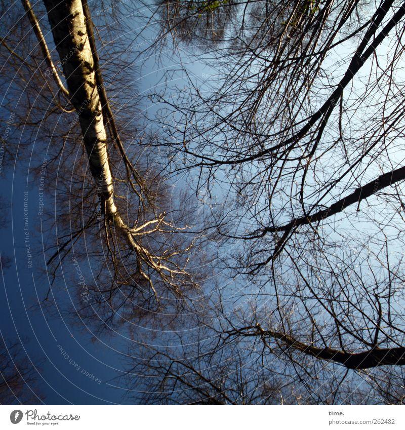 Schwindeltest Himmel Natur Baum Pflanze Winter Wald Ferne Umwelt Klima Wachstum Wandel & Veränderung Ast Schönes Wetter Gesellschaft (Soziologie) durcheinander Konkurrenz