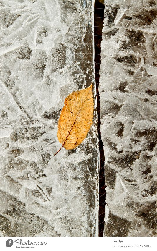 Konserviert im Eis Natur schön Blatt Winter kalt gelb grau außergewöhnlich See Eis Klima ästhetisch Wandel & Veränderung Frost gefroren Riss