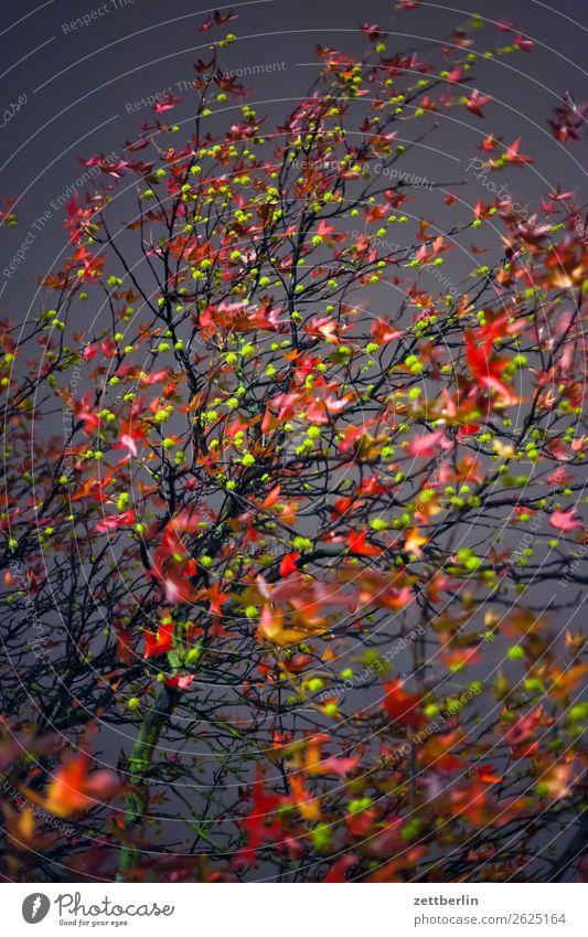 Herbstabend Abend Abschied Ast Baum Blatt mehrfarbig dunkel Ende Farbe Garten Herbstlaub Traurigkeit Nacht Natur Park Trauer Pflanze Wechseln Zweig Oktober