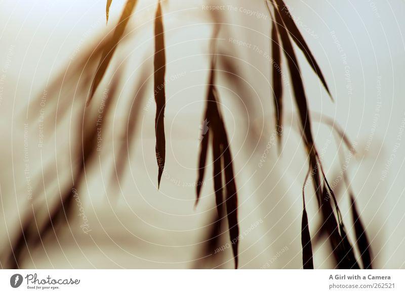 fast so interessant wie eigentlich Umwelt Natur Pflanze Urelemente Sommer Herbst Gras Ähren träumen Traurigkeit braun hängen Tod Gedeckte Farben Außenaufnahme