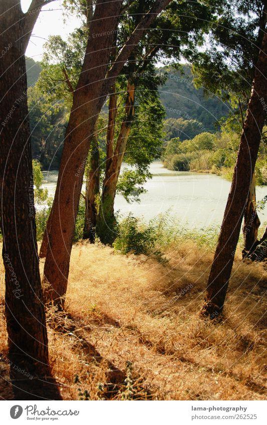 La orilla del Guadalhorce [XXV] Natur Pflanze Urelemente Sonnenlicht Baum Sträucher Schilfrohr Flussufer Malaga Andalusien Spanien natürlich Erholung ruhig