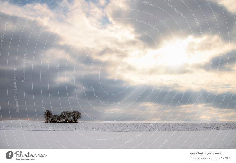 Natur Landschaft weiß Baum Einsamkeit ruhig Winter natürlich Schnee Wiese Deutschland hell Horizont Wetter Europa Jahreszeiten