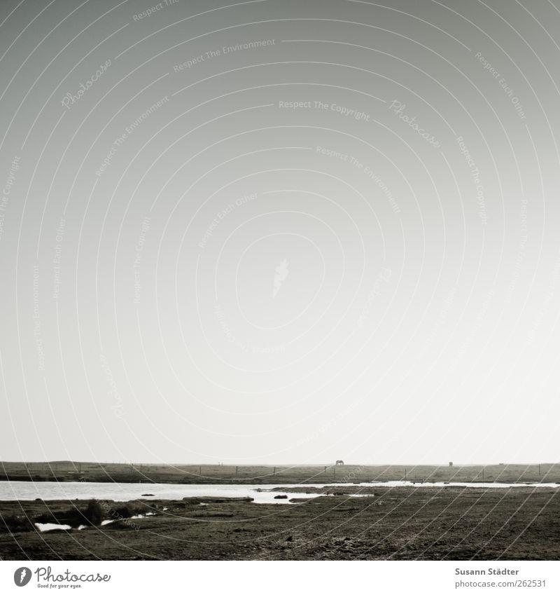 weites land Himmel Natur Wasser Tier Wiese See Feld wild Wildtier frei Insel Pferd Schönes Wetter Nordsee Fressen flach
