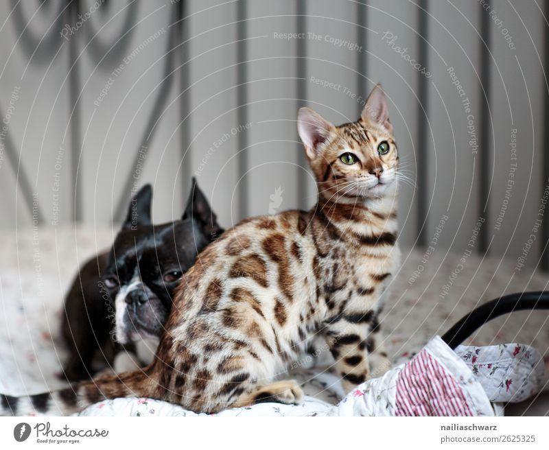 Freunde Katze Hund schön Erholung Tier Freude Zusammensein Freundschaft Zufriedenheit Raum Kommunizieren liegen elegant sitzen Idylle Tiergruppe
