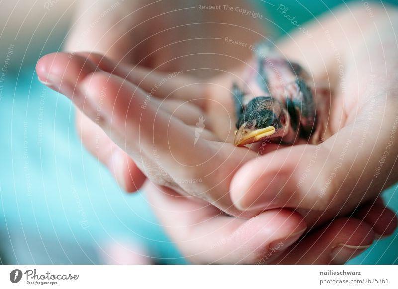 Jungvogel Spatz Mensch Hand Finger Umwelt Natur Tier Wildtier Tiergesicht Vogel Sperlingsvögel Schnabel 1 festhalten hocken klein nackt natürlich niedlich