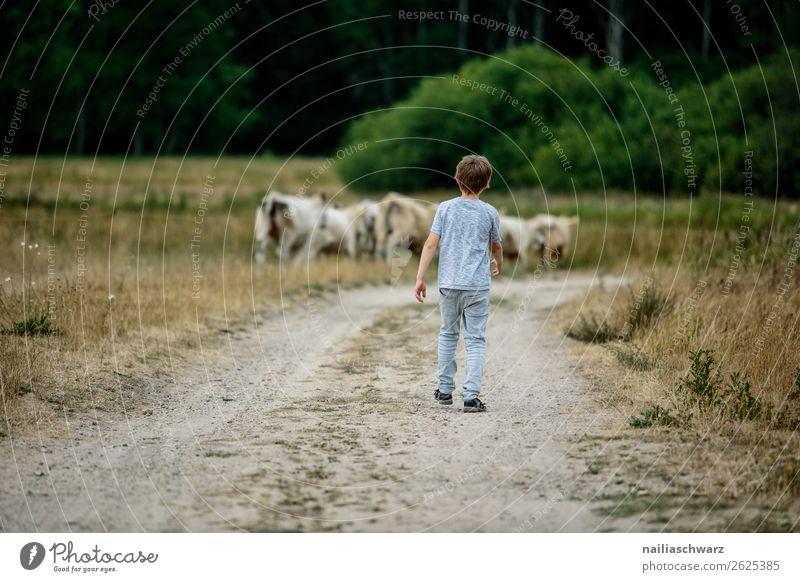 Sommer Landwirtschaft Forstwirtschaft Mensch Kind Junge Körper 1 8-13 Jahre Kindheit Umwelt Natur Landschaft Gras Sträucher Feld Tier Kuh Herde Rind Vieh