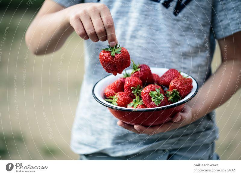 Erdbeeren Lebensmittel Frucht Dessert Ernährung Picknick Bioprodukte Vegetarische Ernährung Schalen & Schüsseln Freude Gesundheit Gesunde Ernährung Allergie
