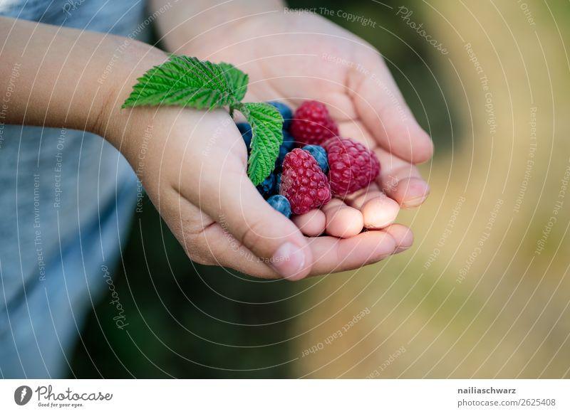 Himbeeren Lebensmittel Frucht Ernährung Lifestyle Ferien & Urlaub & Reisen Sommer Sommerurlaub Mensch Kind Hand 1 8-13 Jahre Kindheit Duft festhalten Gesundheit