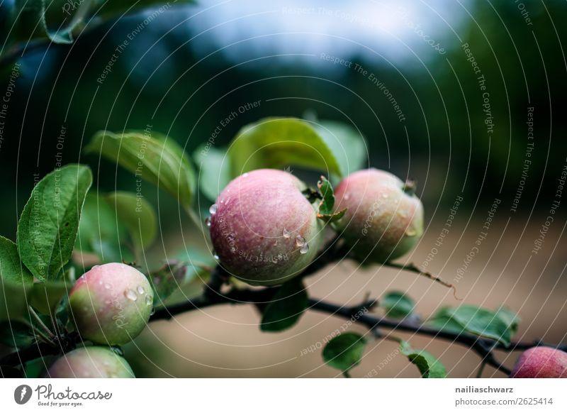 Äpfeln Frucht Apfel Ernährung Bioprodukte Vegetarische Ernährung Diät Gesundheit Gesunde Ernährung Leben harmonisch Umwelt Natur Pflanze Wasser Wassertropfen