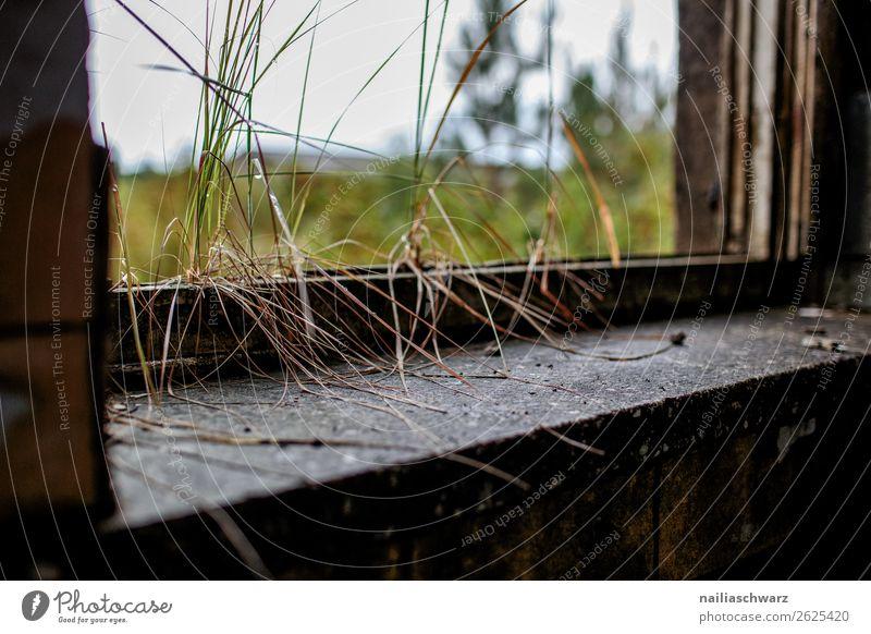 Verlassen Natur Pflanze Gras Grünpflanze Mecklenburg-Vorpommern Vogelsang-Warsin Deutschland Europa Menschenleer Haus Ruine Bauwerk Gebäude Architektur Kazerne