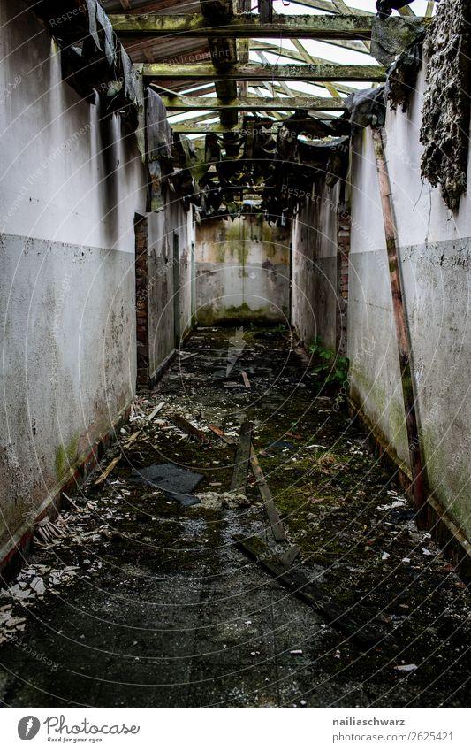 Ruine Kleinstadt Haus Hütte Industrieanlage Fabrik Bauwerk Gebäude Militärgebäude Mauer Wand Gang Gangway Linie alt dreckig dunkel gruselig Stimmung Traurigkeit