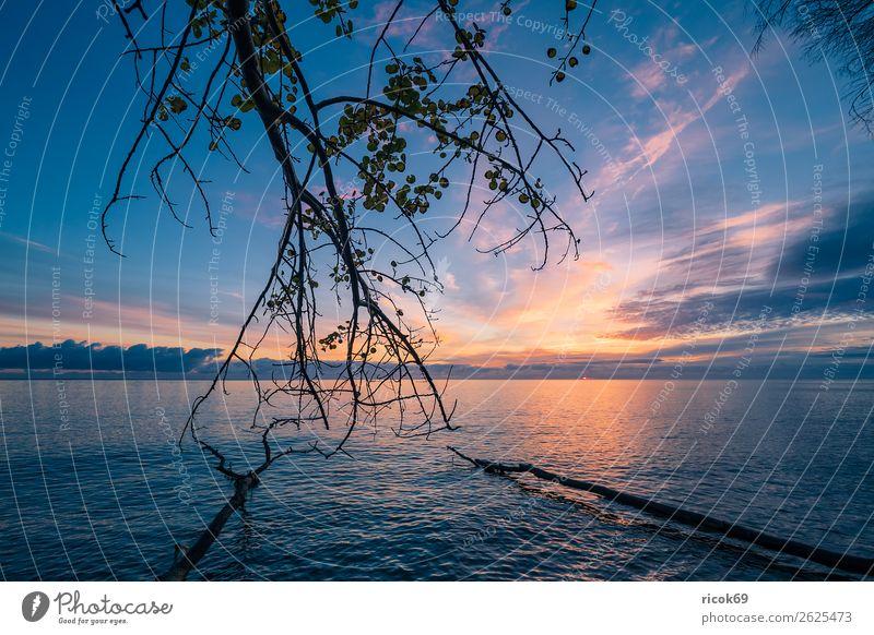 Ostseeküste auf der Insel Moen in Dänemark Erholung Ferien & Urlaub & Reisen Tourismus Strand Meer Natur Landschaft Wasser Wolken Herbst Baum Wald Küste Stein