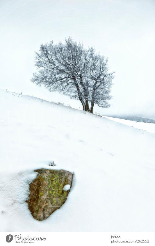 Was für ein … Landschaft Himmel Winter Wind Nebel Baum Hügel Berge u. Gebirge kalt blau braun grün schwarz weiß Kraft Windflüchter Windbuche Neigung Farbfoto