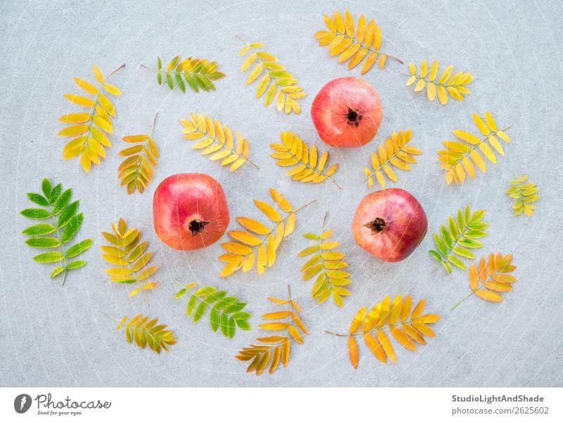 Granatäpfel und bunte Aschebaumblätter Frucht Bioprodukte Vegetarische Ernährung schön Gesunde Ernährung Garten Gartenarbeit Kunst Natur Pflanze Herbst Baum