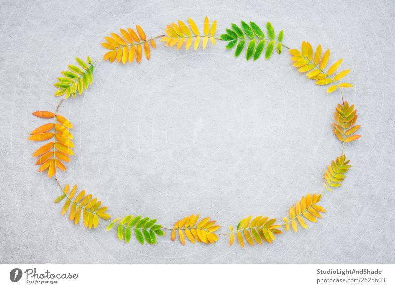 Natur Pflanze Farbe schön grün Baum Blatt Wald Herbst gelb natürlich Kunst Garten Textfreiraum orange grau