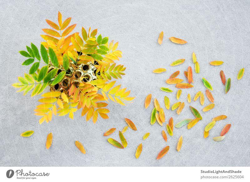 Bunte Aschebaumblätter in einer goldenen Lotusvase Design schön Freizeit & Hobby Garten Gartenarbeit Kunst Natur Pflanze Herbst Baum Blatt Grünpflanze