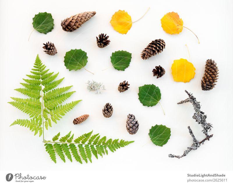 Skandinavischer Wald Flachlage Freizeit & Hobby Sommer Garten Gartenarbeit Landwirtschaft Forstwirtschaft Natur Pflanze Herbst Baum Moos Farn Blatt Grünpflanze