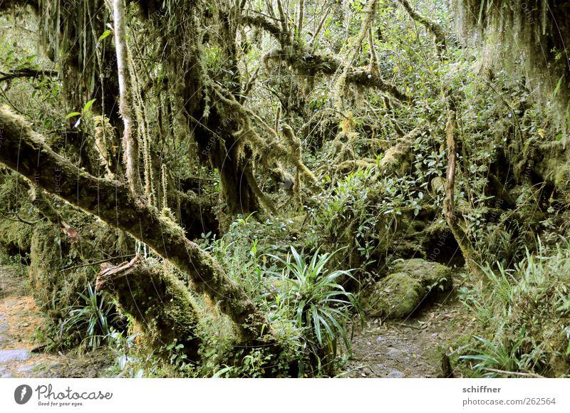 Da hinten - ein Tier! Umwelt Natur Pflanze Baum Gras Sträucher Moos Grünpflanze Wildpflanze exotisch Urwald grün Große Klette Farn Unterholz durcheinander