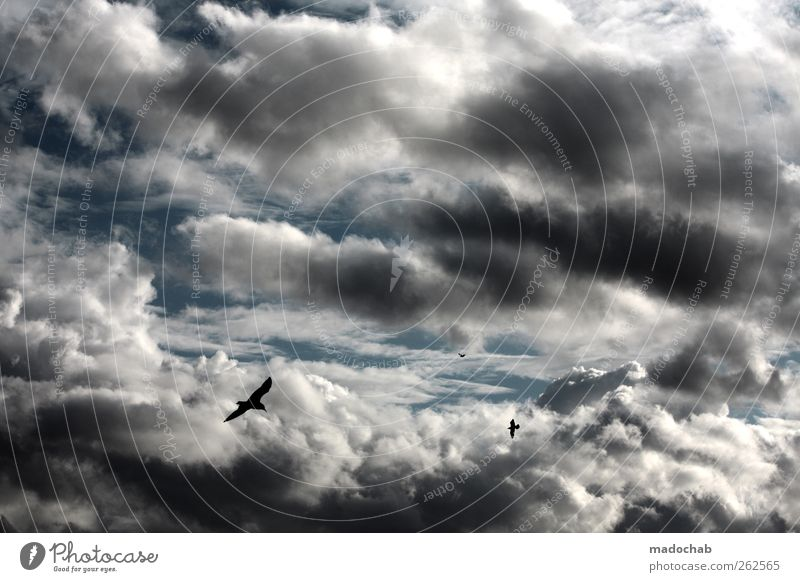 und es wird Regen geben Himmel Wolken Ferne Umwelt kalt Stimmung Vogel Wetter Klima Energie Ende Unwetter chaotisch Klimawandel schlechtes Wetter Gewitterwolken