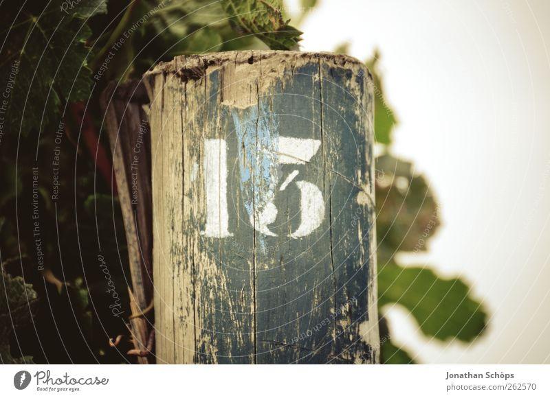 Der Weinberg 13 Umwelt Natur Pflanze braun Ziffern & Zahlen Schilder & Markierungen Holzpfahl Nummerntafel Reihe Landwirtschaft Nahaufnahme Dürre Orientierung