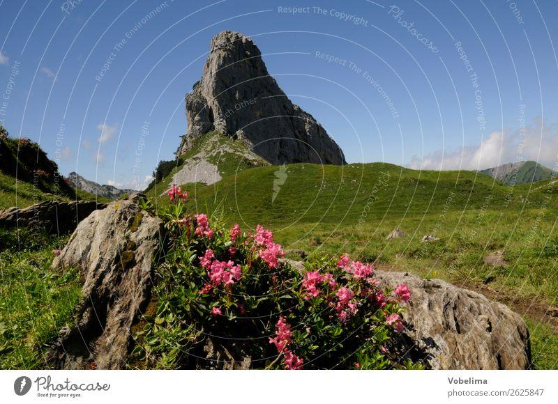 Schmalstöckli Natur Landschaft Pflanze Sommer Schönes Wetter Blume Alpen Berge u. Gebirge Gipfel blau braun mehrfarbig grün rosa schwarz schmalstöckli Schweiz