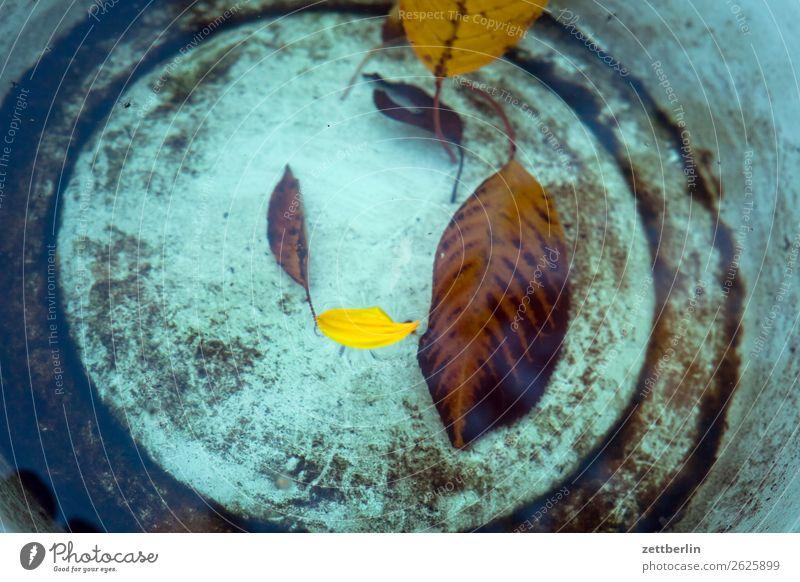 Blätter im Eimer Herbst Blatt Herbstlaub Schalen & Schüsseln Wasser Behälter u. Gefäße Im Wasser treiben Kirschbaum Oktober November Menschenleer Textfreiraum