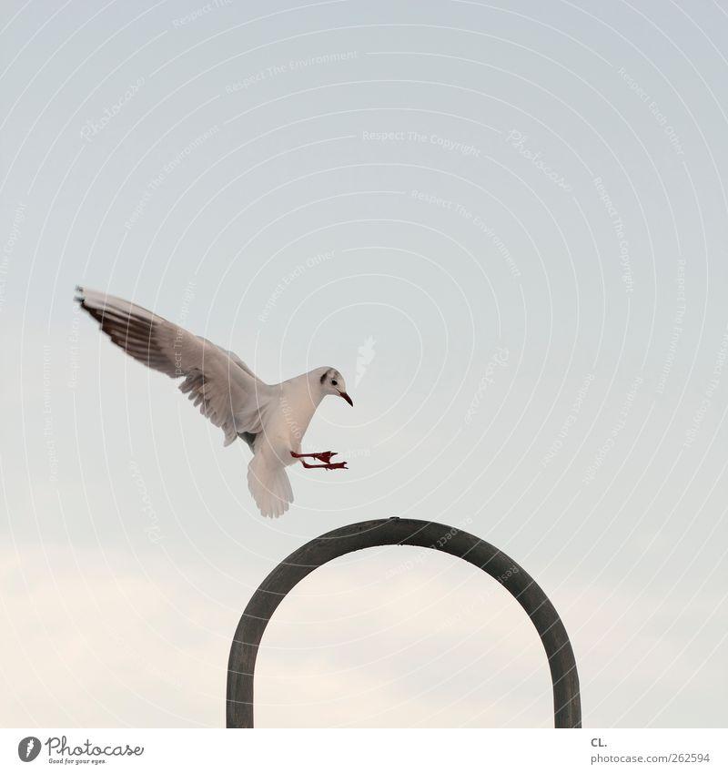 punktlandung Himmel Tier Wolken Freiheit Lampe Vogel fliegen Wildtier frei Flügel Ziel Tiergesicht Laterne Möwe Schnabel Krallen