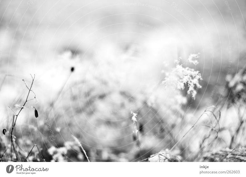 Winterminiaturlanschaft Natur Pflanze Blume Wiese kalt Schnee Gras klein Wetter Eis Feld Nebel Klima Frost Vergänglichkeit