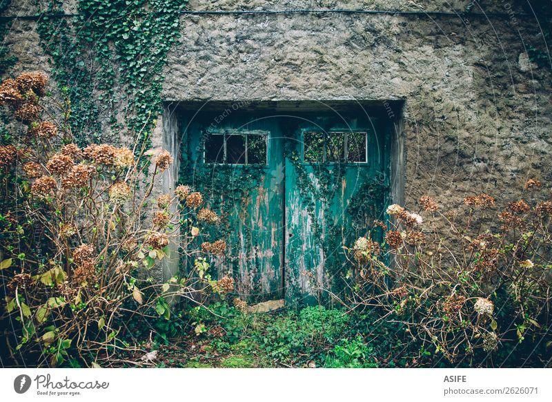 Alte Aquamarintür Winter Haus Garten Pflanze Herbst Blume Gras Efeu Ruine Gebäude Architektur Fassade Stein Holz alt retro blau grün Tür Verlassen abgerissen