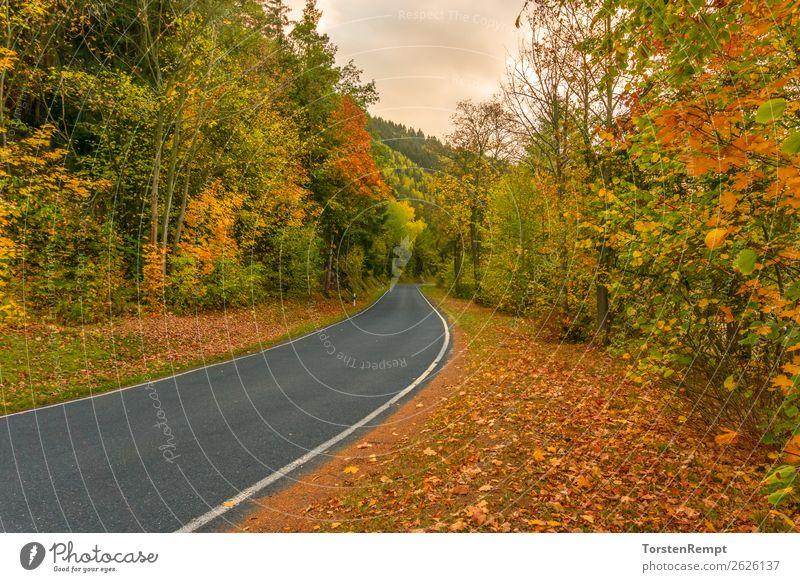 herbstliche Straße Umwelt Landschaft Herbst Baum Blatt Wald Verkehr Verkehrswege braun mehrfarbig gelb grün orange rot Thüringen Thüringer Wald Deutschland