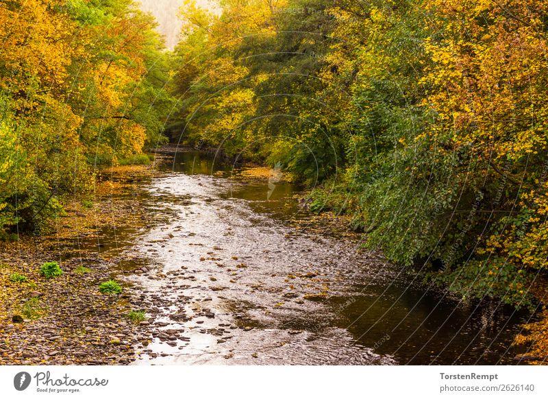 Am Fluss Natur Landschaft Pflanze Wasser Herbst Wald Wellen mehrfarbig gelb grün orange rot Bad Blankenburg Flusslandschaft Landkreis Saalfeld-Rudolstadt