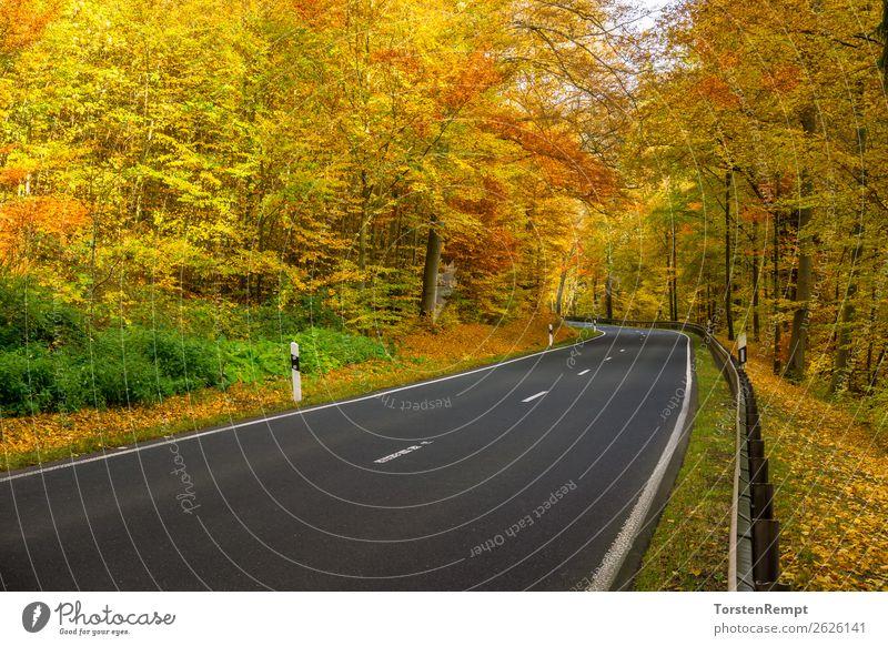 Herbststraße Umwelt Natur Landschaft Baum Verkehr Verkehrswege Straße fahren verblüht dehydrieren mehrfarbig gelb grün rot Lebensfreude Thüringen Thüringer Wald