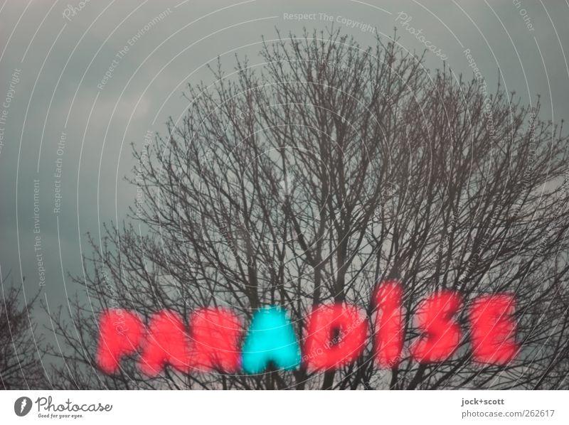 Greetings from Paradise Himmel Winter Baum hängen außergewöhnlich dunkel Glück positiv trist grau rot Stimmung Hoffnung Sehnsucht Endzeitstimmung Glaube