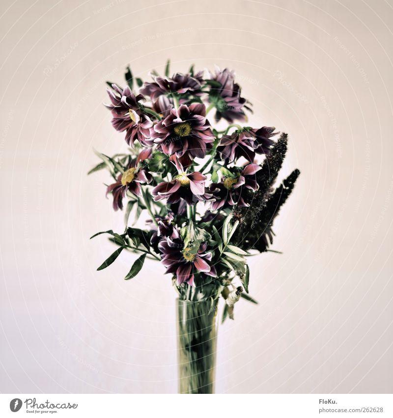 Welk alt grün Pflanze Blume Tod Traurigkeit rosa trist retro Trauer Kitsch Blumenstrauß trashig beige welk Vase