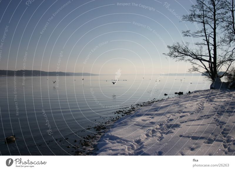 Winter am starnberger see blau Schnee See glänzend Schneelandschaft Starnberg Starnberger See