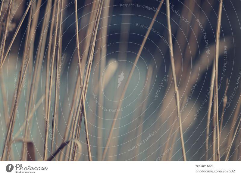 Schilf. Natur Pflanze Tier gelb Umwelt Wiese Landschaft Herbst Gras Wege & Pfade Küste Park Kraft Feld gold Sträucher