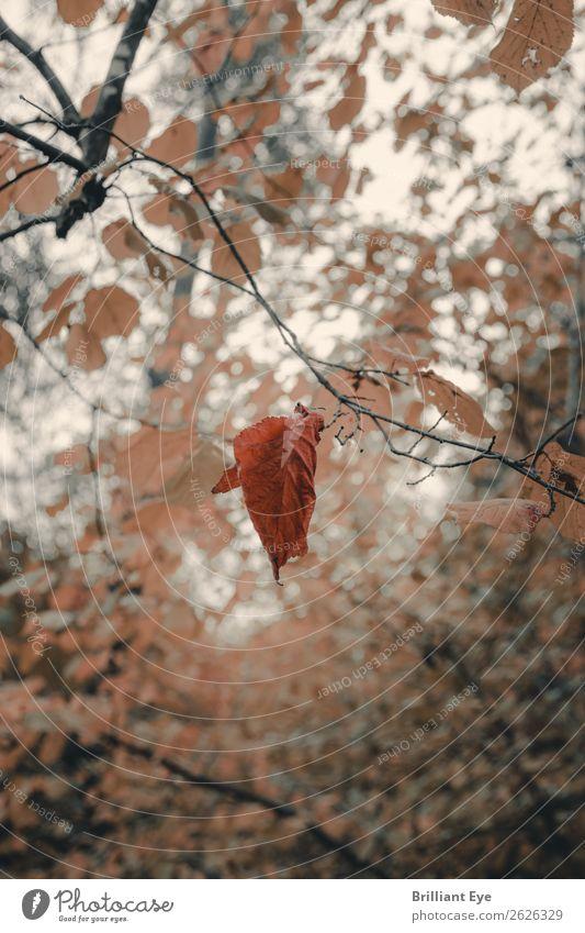 Am seidenen Faden Umwelt Natur Pflanze Herbst Wind Baum Blatt Park Wald alt fallen hängen einfach einzigartig natürlich gelb rot Kraft achtsam stagnierend