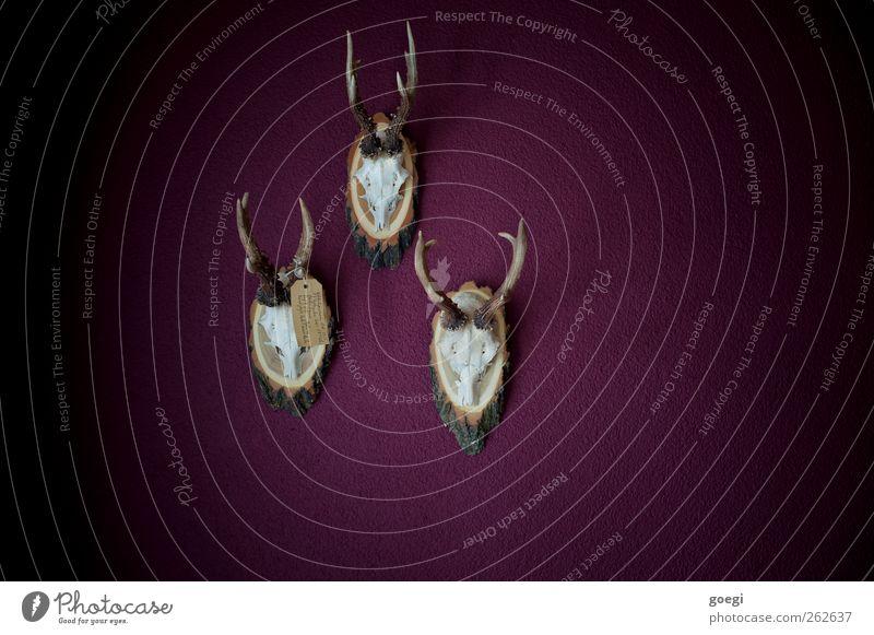 horny Mauer Wand Tier Totes Tier Reh Tierschädel Horn 3 Putz Putzfassade Trophäe hängen Klischee trashig violett Nostalgie skurril Surrealismus Tod Tradition