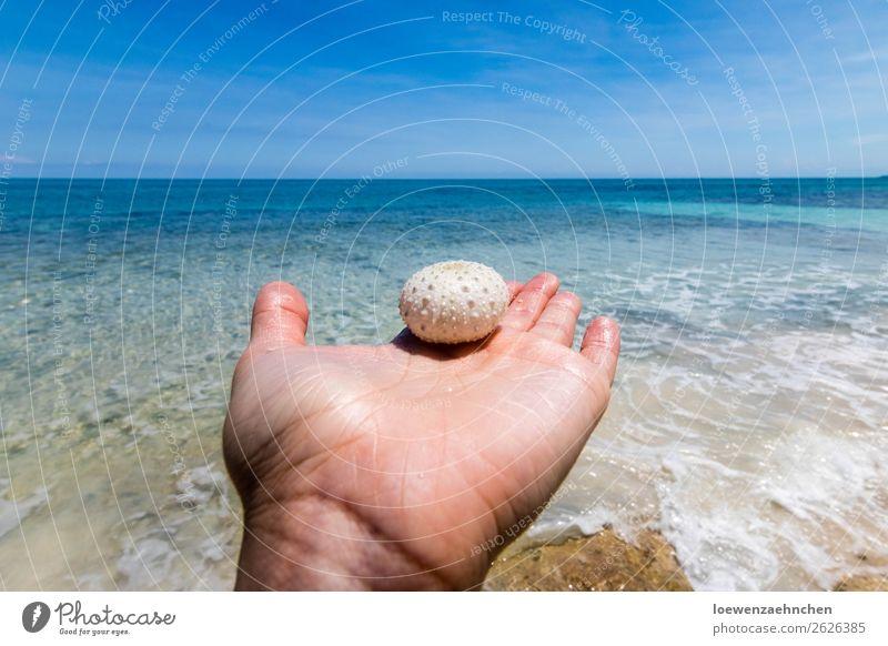 Seeigel in der Karibik Hand Natur Sand Wasser Sommer Schönes Wetter Strand Meer Totes Tier 1 beobachten entdecken Ferien & Urlaub & Reisen außergewöhnlich