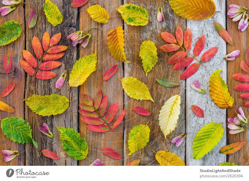 Bunte Herbstblätter auf rustikalem Holzgrund Design schön Freizeit & Hobby Garten Gartenarbeit Landwirtschaft Forstwirtschaft Kunst Kunstwerk Umwelt Natur