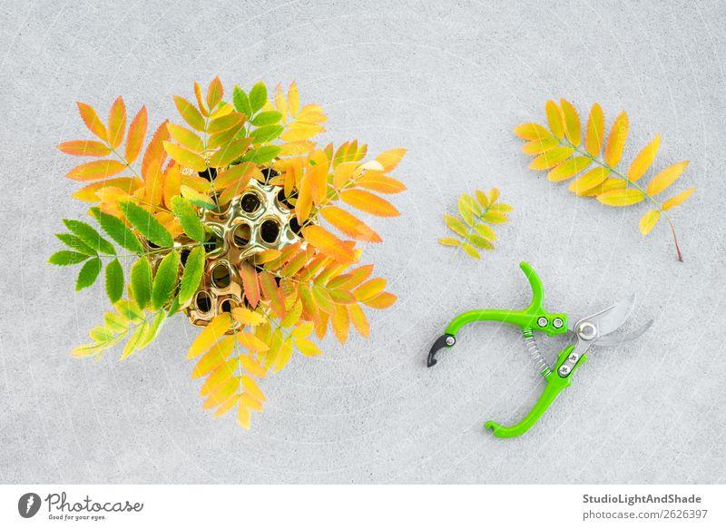 Bunte Aschebaumblätter in einer goldenen Lotusvase Design schön Freizeit & Hobby Garten Dekoration & Verzierung Gartenarbeit Schere Natur Pflanze Herbst Baum