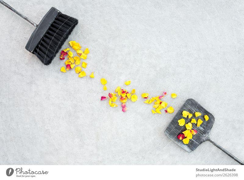 Gelbe Rosenblätter, schwarze Bürste und eiserne Kehrschaufel schön Freizeit & Hobby Sommer Garten Gartenarbeit Werkzeug Besen Natur Landschaft Herbst Wetter