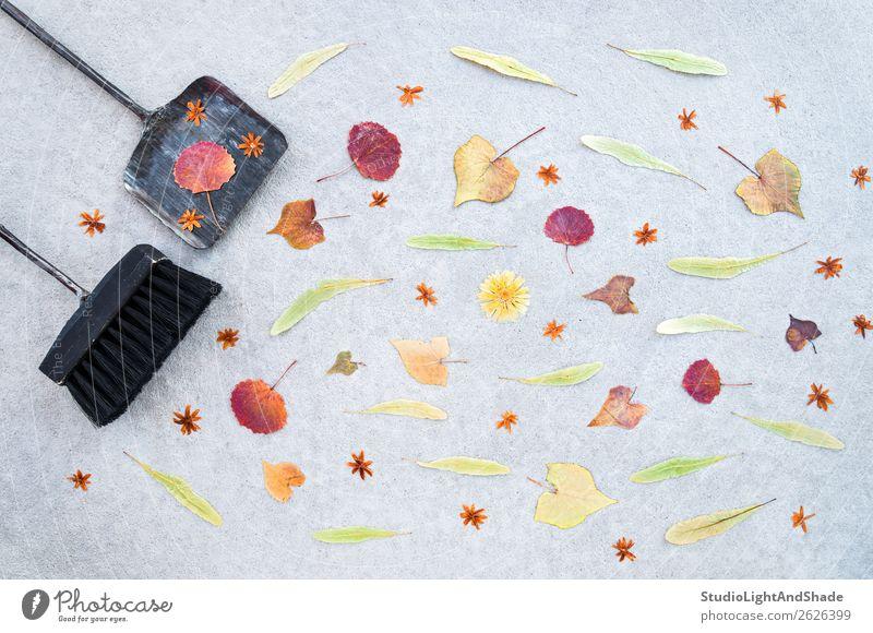 Herbstlaub und Trockenblumen wegfegen schön Freizeit & Hobby Garten Gartenarbeit Werkzeug Besen Bürste Umwelt Natur Pflanze Wetter Wind Baum Blume Blatt Blüte