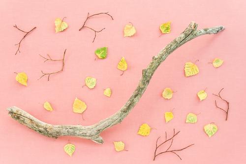 Natur Pflanze Farbe schön Baum Blatt Wald Holz Herbst gelb natürlich Kunst Garten Tod rosa Design