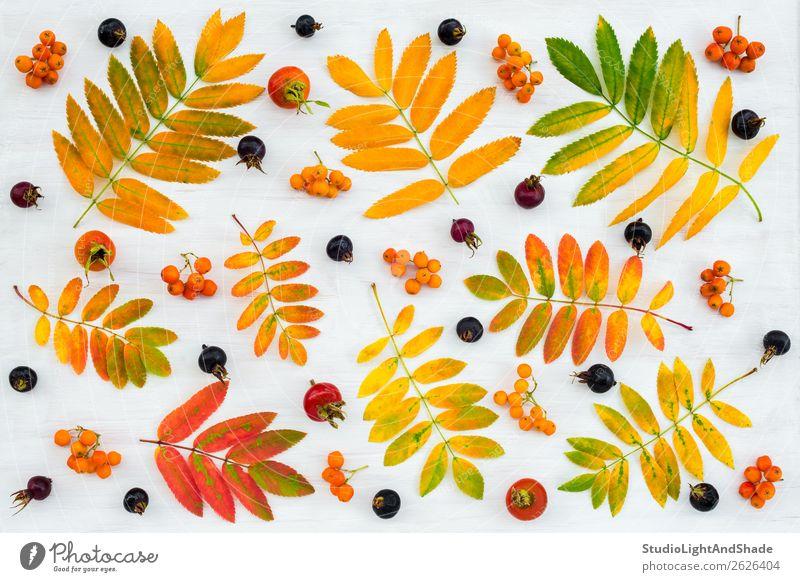 Bunte Herbstflachslage mit Blättern und Beeren Frucht Design schön Freizeit & Hobby Garten Gartenarbeit Landwirtschaft Forstwirtschaft Kunst Kunstwerk Natur