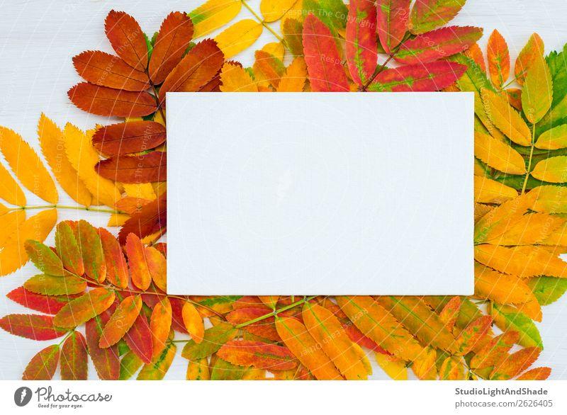 Weiße Leinwand auf farbenfrohem Aschebaum hinterlässt Hintergrund Design schön Freizeit & Hobby Handarbeit Garten Kunst Kunstwerk Gemälde Natur Pflanze Herbst