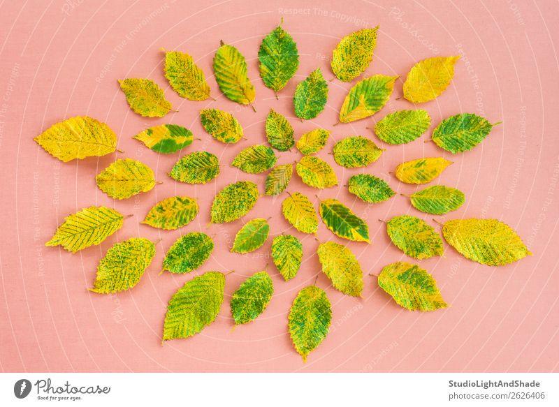 Bunte Erlenblätter auf pastellrosa Hintergrund Design schön Freizeit & Hobby Garten Gartenarbeit Landwirtschaft Forstwirtschaft Kunst Kunstwerk Natur Pflanze