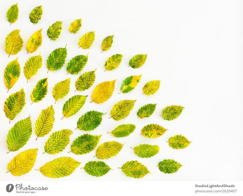 Natur Sommer Pflanze Farbe schön grün weiß Baum Blatt Wald Herbst gelb natürlich Kunst Garten Textfreiraum